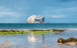 The Bass Rock seabird colony, East Lothian