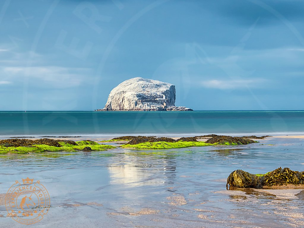 The Bass Rock seabird colony, East Lothian