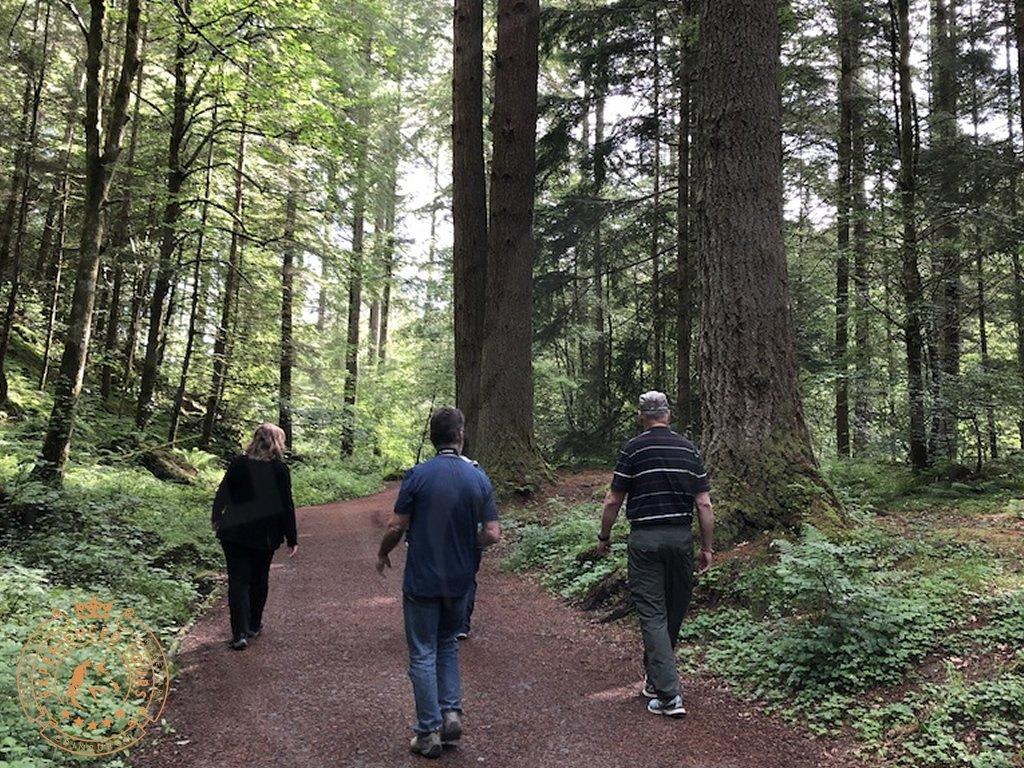 The Tree Walk at The Hermitage Dunkeld