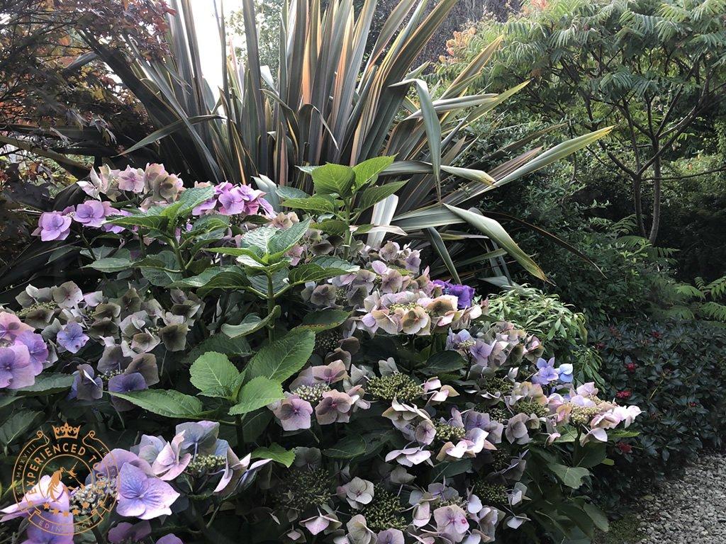 Dr Neil's Garden Duddingston