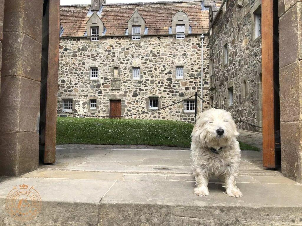 The resident Westie at Duart Castle