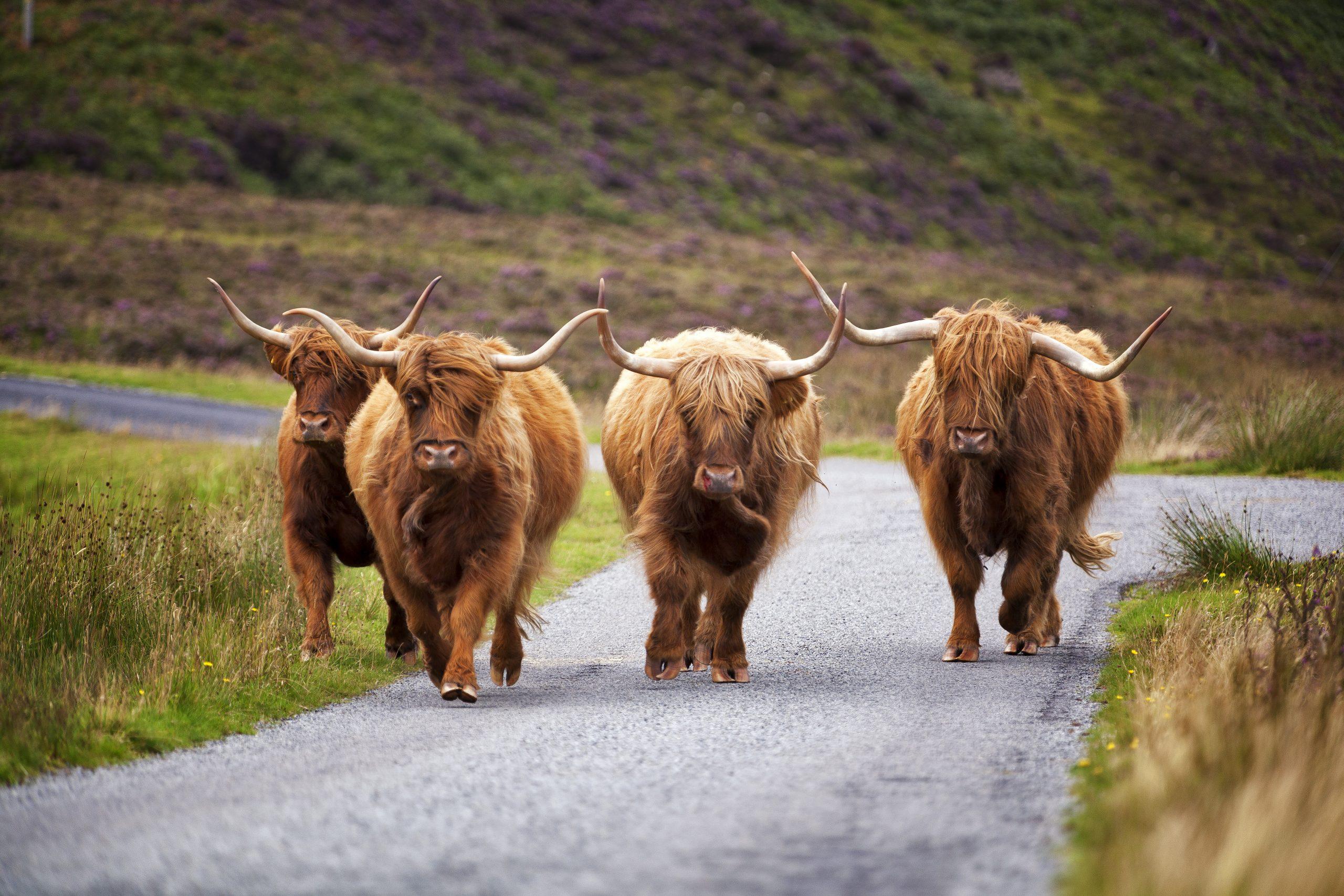 Traffic jam on the Bealach na Ba